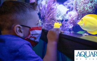 Aquarium of Niagara header image