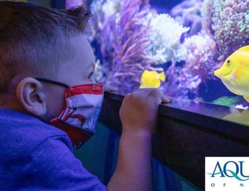 """Au-some"" Aquarium: Q&A with the Aquarium of Niagara"